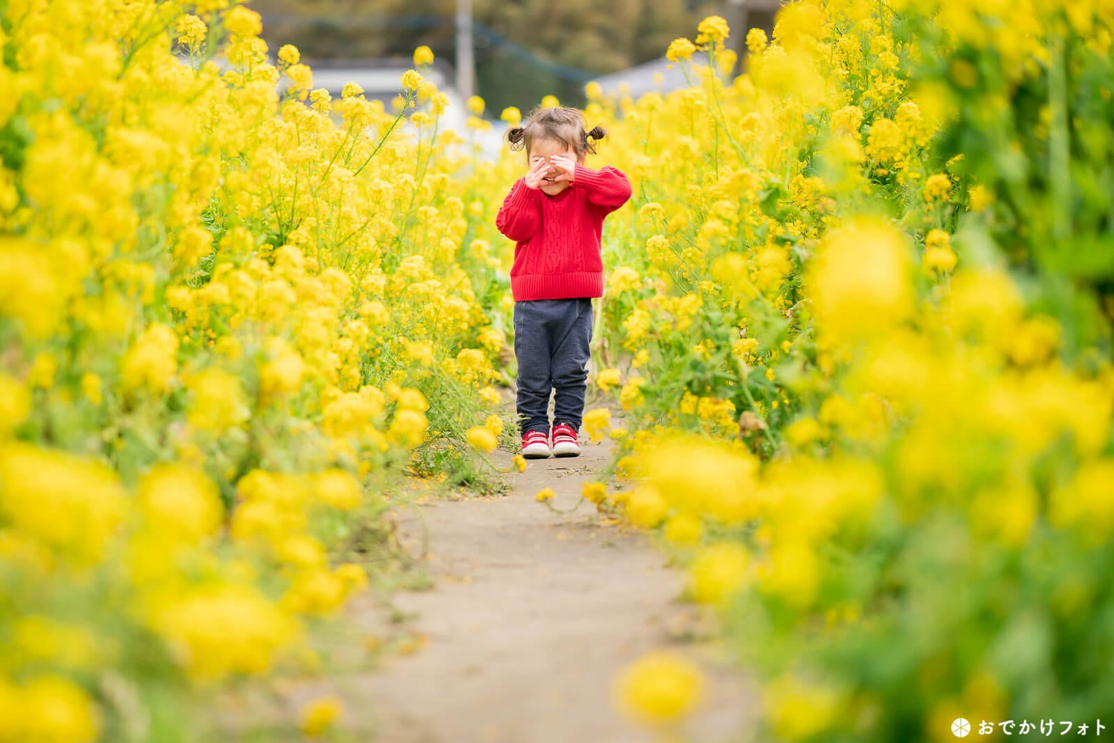 糸島市福ふくの里・菜の花
