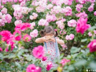 福岡市植物園・バラ園